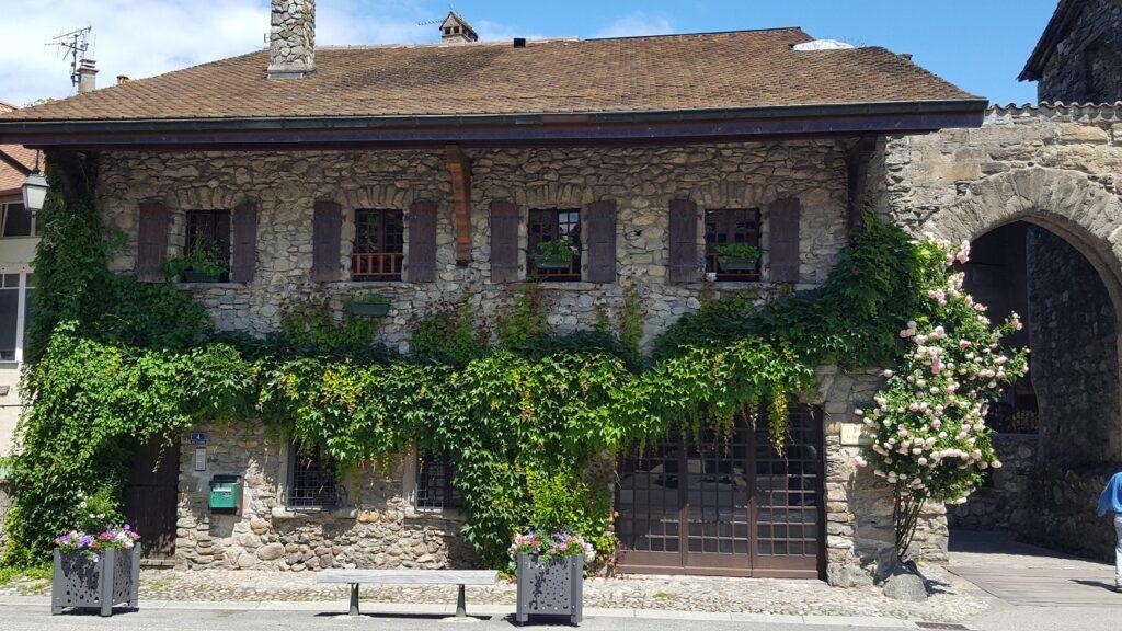 Jungfernrebe mit hohem Zierwert an Steinhaus