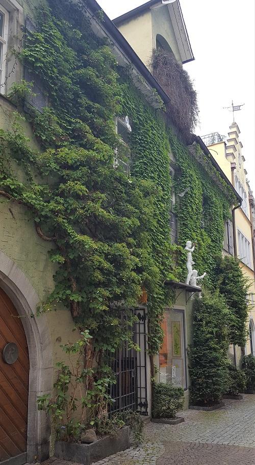 Links Kletterhortensie und rechst Efeu bedeckt fast komplette Front des Haus