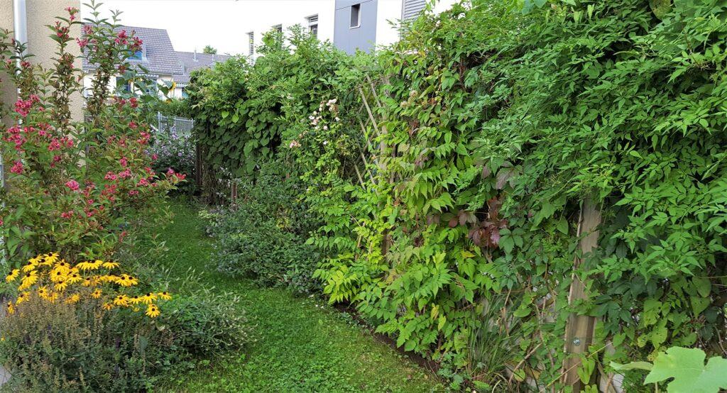Kletterpflanzen an Holzgitterwand Elemente in Reihenhausgarten
