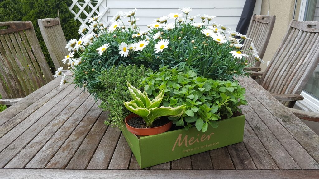 Pflanzen aus Gartencenterr